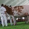 Mexico16_Holstein_1M9A5984