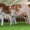 Mexico16_Holstein_1M9A5983