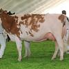 Mexico16_Holstein_1M9A5982