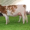 Mexico16_Holstein_1M9A5980