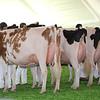 Mexico16_Holstein_1M9A5972
