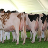 Mexico16_Holstein_1M9A5975