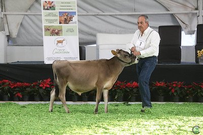Mexico National Show 2016