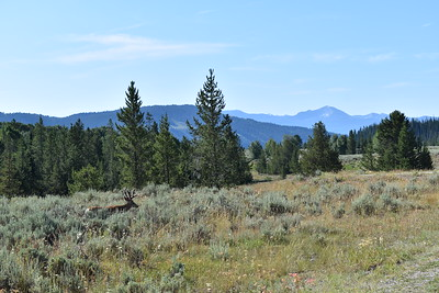Yellowstone & Grand Teton - August 4th, 2019