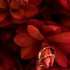 Kourtney & Eric Wedding Day-15