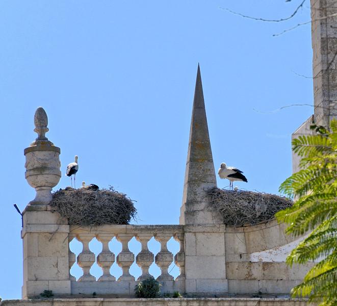 Storks in Faro