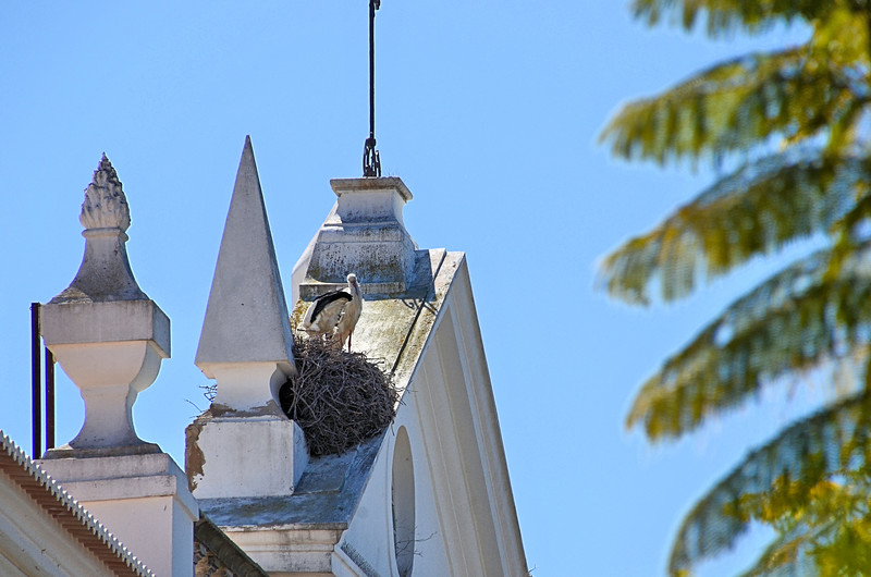 Stork on top of Arco da Vila