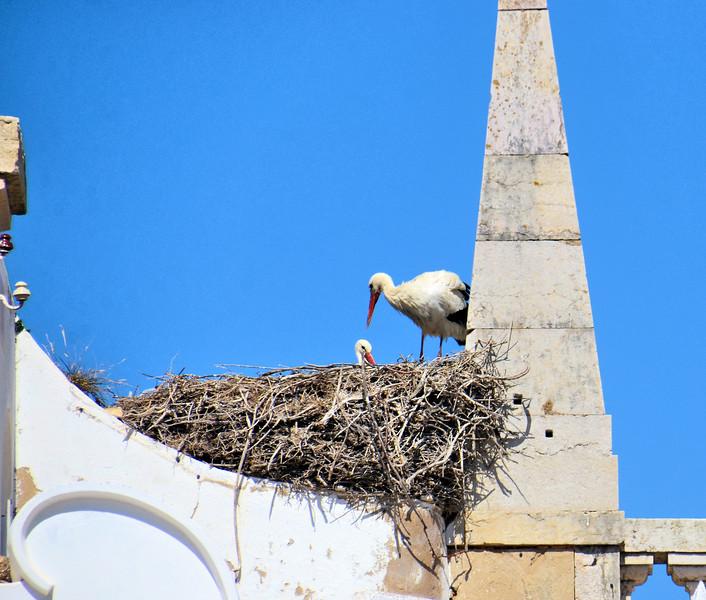 Storks nesting in Faro