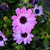 Flowers at Loulé Farmers Market