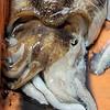 Squid at Loulé market