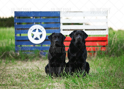 Riggs&Mack|Bluebonnets - 001