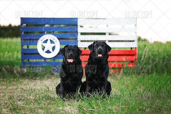 Riggs&Mack|Bluebonnets - 003