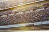 Rolex 24 at Daytona - IMSA WeatherTech SportsCar Championship - Daytona International Speedway - 54 CORE autosport, Nissan DPi, Jon Bennett, Colin Braun, Romain Dumas, Loic Duval