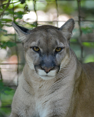 MET 090919 Puma