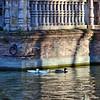 Ducks in the moat at Plaza España