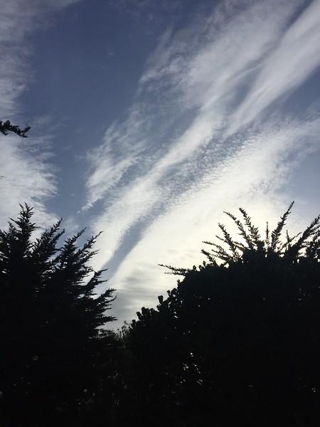 <b>Presidio</b> <br>San Francisco, CA <br>April 14, 2019