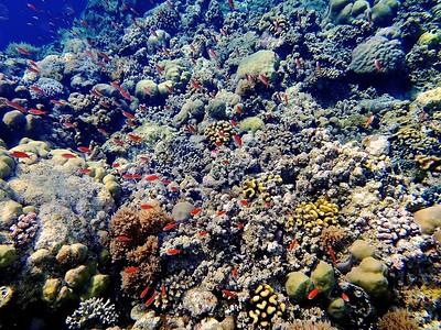 Fish school & coral