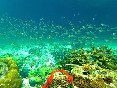 Fish school, coral, sponge
