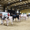 219 WCDS Jr Show Chp Lineup-7818