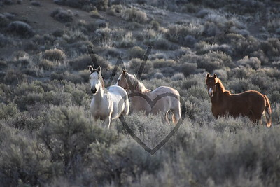Wild Horses and Other Critters