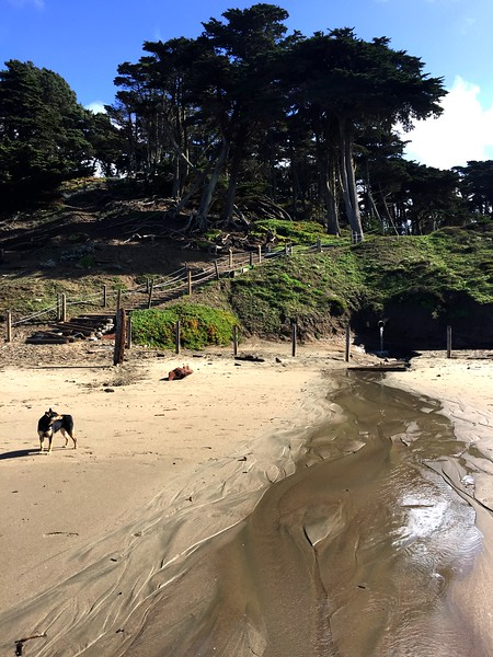 <b>Baker Beach</b> <br>San Francisco, CA <br>February 2, 2019