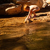 Luna takes a break from the heat by playing around in the Virgin River for a while.