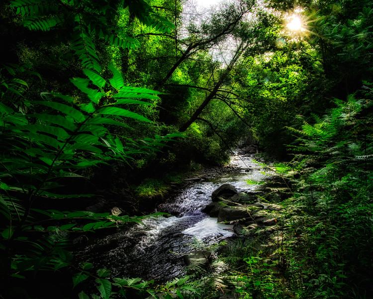 Just Past Cascade Mill Falls