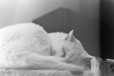 Charlie Sleeps
