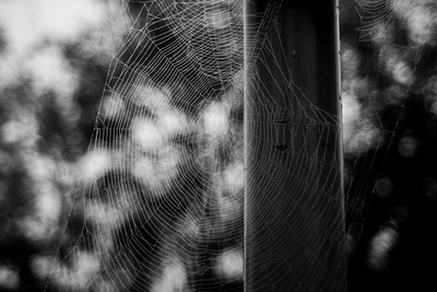 Spiders Web Bokeh