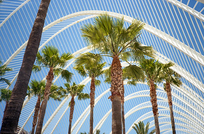 Palm Arch (on film)