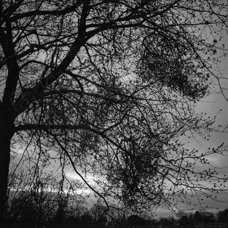 Through Branches