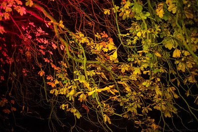 Autumn Colours in the Dark
