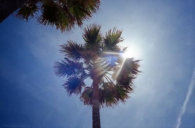 Palm Tree Flare