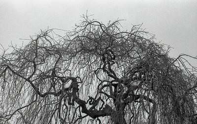 My Favourite Skeleton Tree