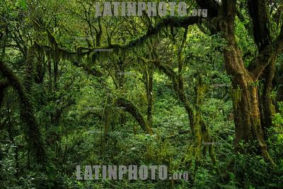 Argentina: rain forest © Reppucci