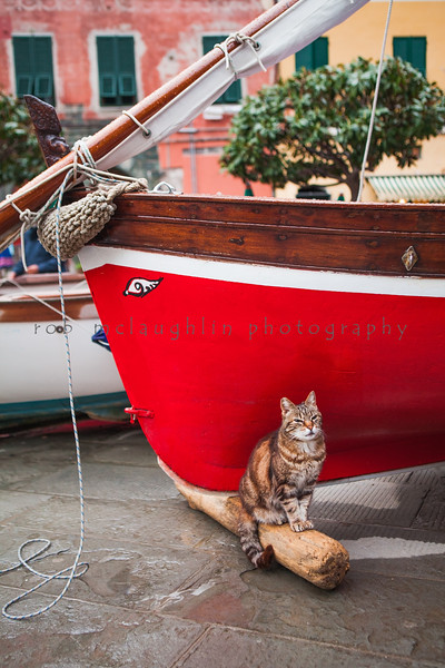 The Captain's Cat , Vernazza , Cinque Terre