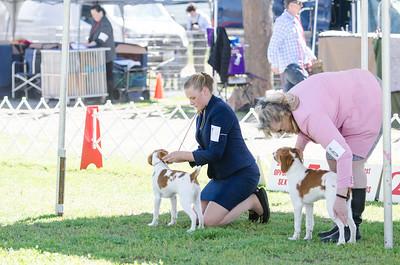 2019 Del Sur Kennel Club Beginner Puppy Sporting Group