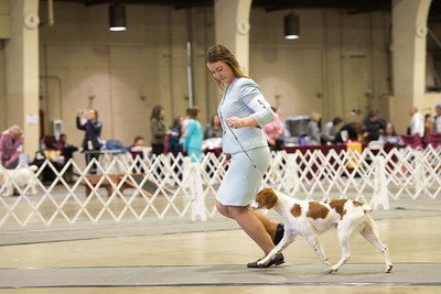 2019 Kennel Club of Beverly Hills Day 1