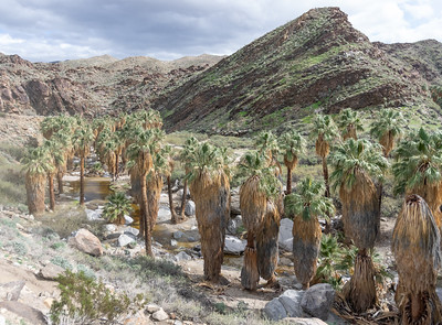 Indian Canyons, Palm Canyon/Victor Loop