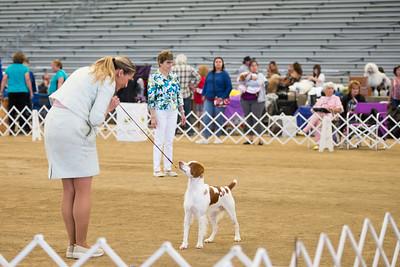 2019 Santa Ana Valley Kennel Club Dog Show