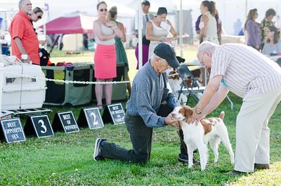 2019 South Bay Kennel Club