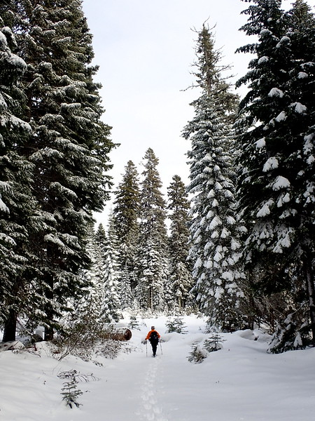 Woman snowshoeing through a snowy forest