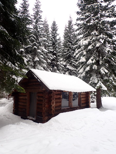 A small ski hut in a snowy forest