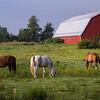 Horse farm in early morning light, Lagrangeville, NY