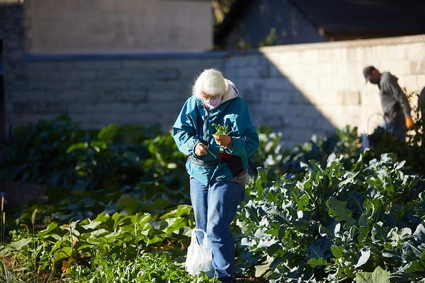 2020 UWL Victory Garden Harvest at Aptiv 0046