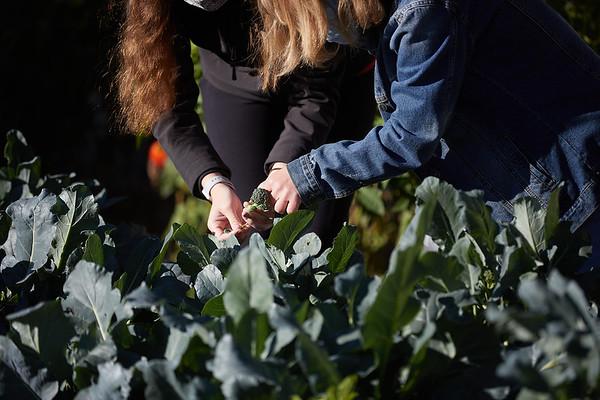 2020 UWL Victory Garden Harvest at Aptiv 0094