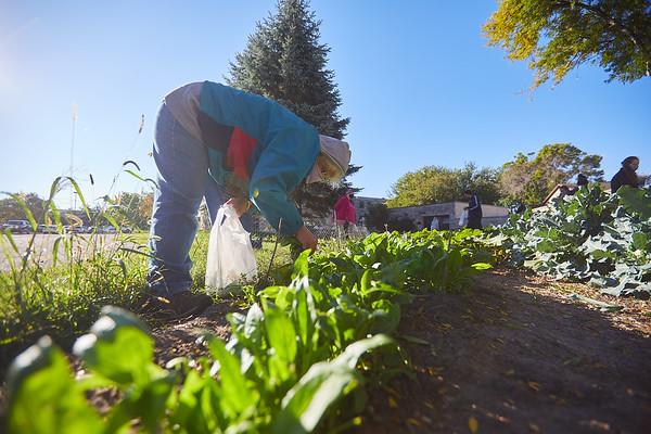 2020 UWL Victory Garden Harvest at Aptiv 0018