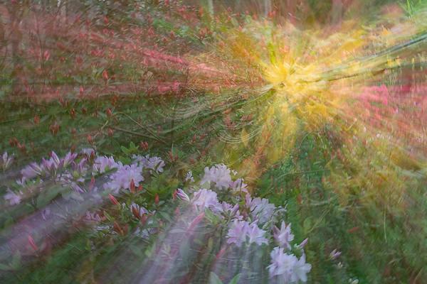 Flower Garden - Jim Howard - PSA Score 6