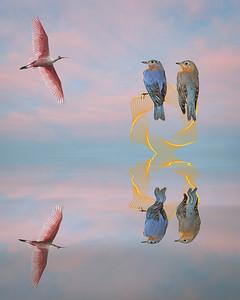 Blue Birds - Joe Howard - PSA Score 8