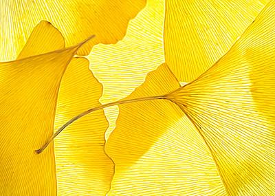magic leaves- PSA Score 10